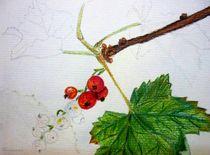 Johannisbeeren, Früchte, Rot,  by Marzena Schulz