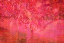 Imgp1954-faa-red-ornamental-crab-apple-tree-xix