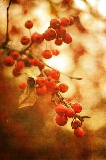 Crab Apples In Sepia von suzanne powers