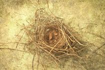 Bird Nest Still Life von suzanne powers