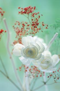 Weiße Rosenblüten Stillleben by Tanja Riedel