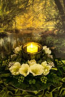 Ein Licht im Wald von Sina Meyer