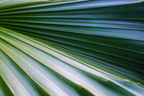Palm Tree Leaf von agrofilms