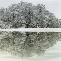 Winter Reflection by David Pringle