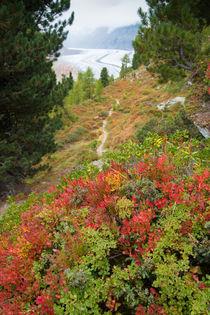 Schweiz Wallis Aletschwald im Herbst von Matthias Hauser