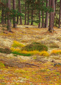 Lichens and Grasses on the Forest Floor von Louise Heusinkveld