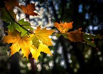 Herbstlaub by Vera Kämpfe