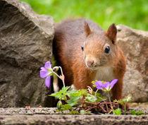 Eichhörnchen von Vera Kämpfe