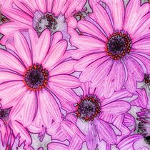Blossom, full frame von mehrfarbeimleben