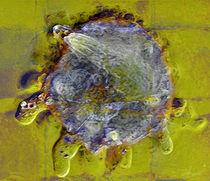 Sonnentierchen IX von Zoia Luecht