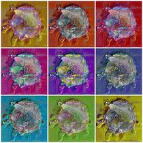 Sonnentierchen Collage von Zoia Luecht
