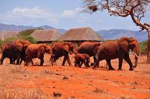 Elephants by Hannah Flint