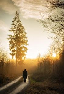 Warmes oranges Licht im Wald - Naturpark Schönbuch von Matthias Hauser