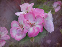 Pretty Blossoms von Judy Hall-Folde