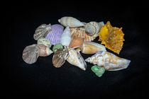 Sea Shells von Judy Hall-Folde