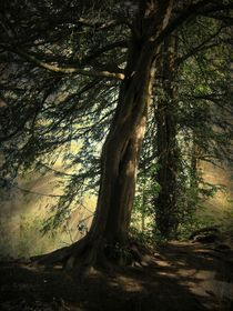 Forest Awakening. by Heather Goodwin