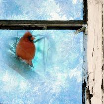Cardinal in the Frost by Jon Woodhams
