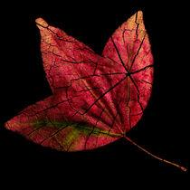 Leaf and Tree von Jon Woodhams