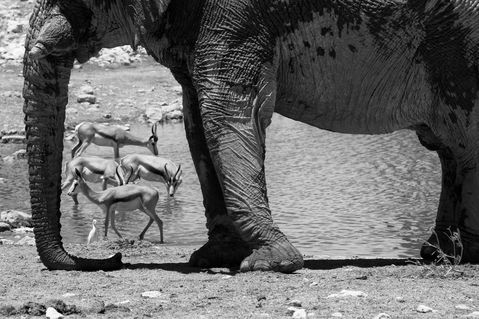 Namibia-tiere-4