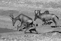 Namibia-tiere-7