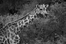 Namibia-tiere-13