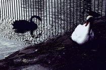 Schwarz und Weiß im Park von Marina von Ketteler