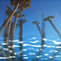 Water Palms von Stephen Lawrence Mitchell