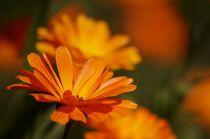 Ringelblumen von Bianca Schumann
