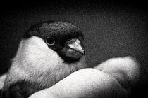 lieber den Vogel in der Hand  von Barbara  Keichel