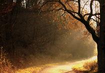 Herbstbaum im Sonnenlicht - Tree in the sun von Johanna Leithäuser