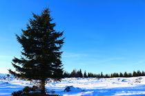 Austrian Forest von robert-boss