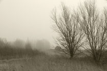 Land im Nebel - Land in the fog  by ropo13