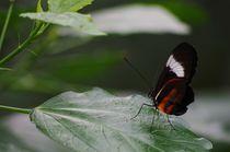 Schmetterling by Bianca Schumann
