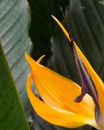 Détail d'une fleur by lorenzo-fp