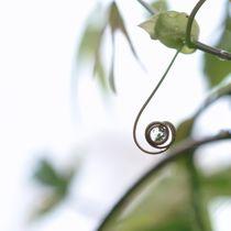 nature 1 von Rosina Schneider