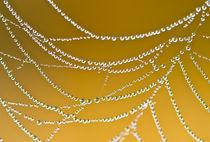 strings of pearls - perlenschnüre von regina thier-grebe