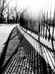 Central Park in the Winter Sun by Jon Woodhams