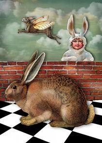 Rabbitlady