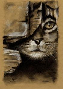 Chat à l'affut derrière une vieille porte en bois. by Philippe Flohic