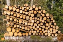 Holzpolter Brennholz