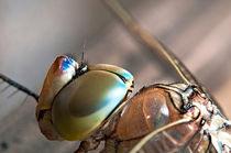 Dragonfly by Marco Leonardo Pieropan