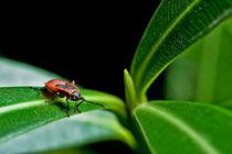 Red bug by Marco Leonardo Pieropan