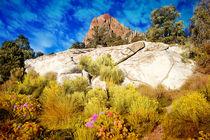 Nevada Desert von Gunter Nezhoda