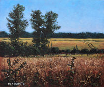 Painting-dorset-countryside-golden-fields-in-summer