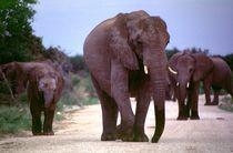Elefanten Gruppe Etoscha Nationalpark Namibia von Eddie Scott
