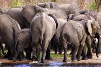 Elefanten beim Rückzug von der Wasserstelle - Namibia von Eddie Scott