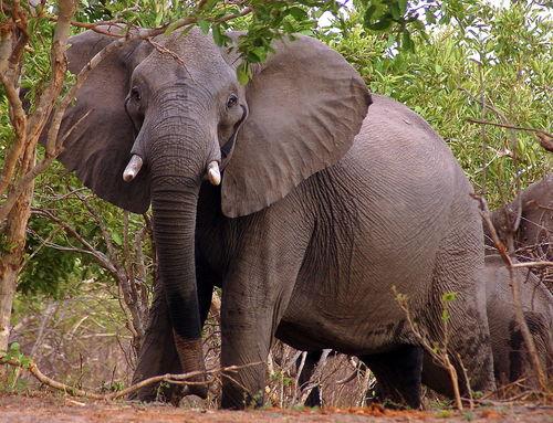 Nambwa-caprivi-kwando-kongola-elefanten-6