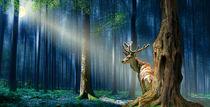 Ein Hirsch im mystischen, nächtlichen Wald von Monika Juengling