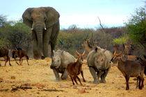 Elefantenbulle in Namibia II - Male Elephant Africa von Eddie Scott