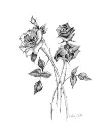 Graphite Roses von Linda Ginn